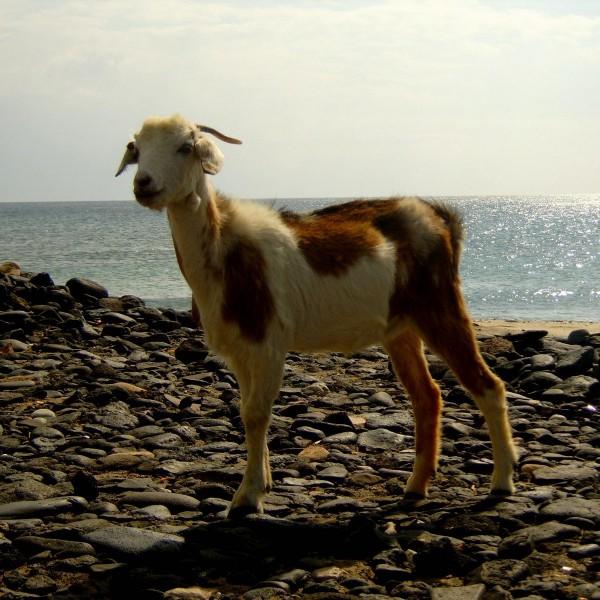 Cooks-Cat_Fuerteventura-Ausfluege_Gefaehrliche-Tiere-1