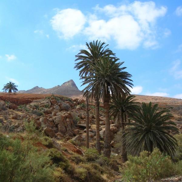 cookscat_fuerteventura-ausfluege_flora-und-fauna_flora_pflanzen
