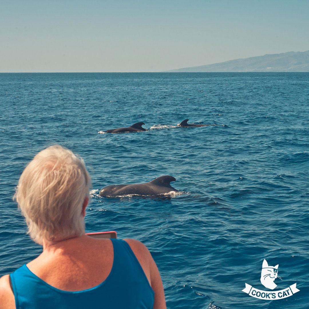 Die Gewässer rund um Teneriffa sind ein Paradies für Delfine und Wale. Angenehme Wassertemperaturen und das glasklare Wasser machen Teneriffa zu einem guten Whale Watching Spot.