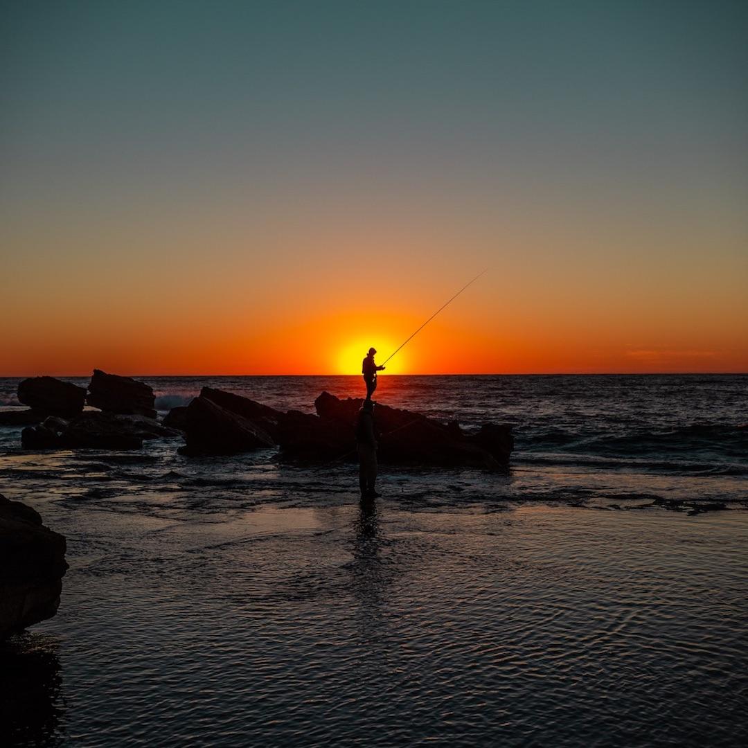 Der Atlantik rund um Fuerteventura ist glasklar und die Wasserqualität hoch. Das schätzen nicht nur Badeurlauber. Der Ozean ist die Heimat vieler kleiner, großer und auch sehr großer Fischarten, die sich in den Gewässern rund um Fuerteventura zu Hause sind.