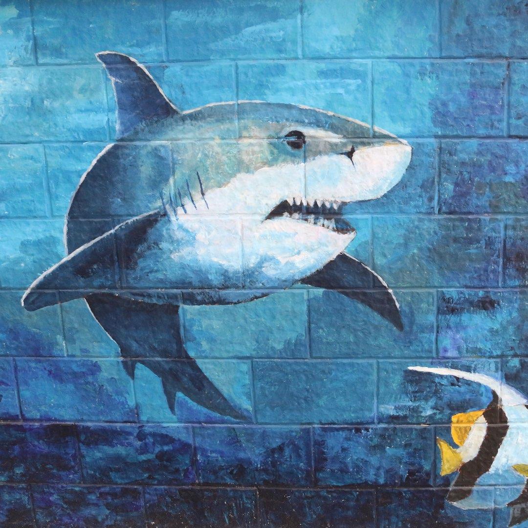Es gibt verschiedene Haie im Atlantik rund um Fuerteventura. Allerdings gab es noch keine Hai-Attacke auf Fuerteventura und somit keine Verletzten in der langen Geschichte Fuerteventuras.