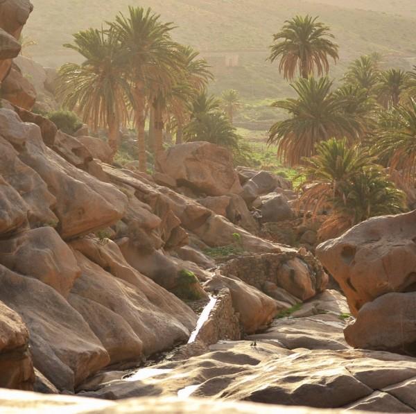 Cooks-Cat_Fuerteventura-Ausfluege_Nationalpark_Naturschutzgebiet
