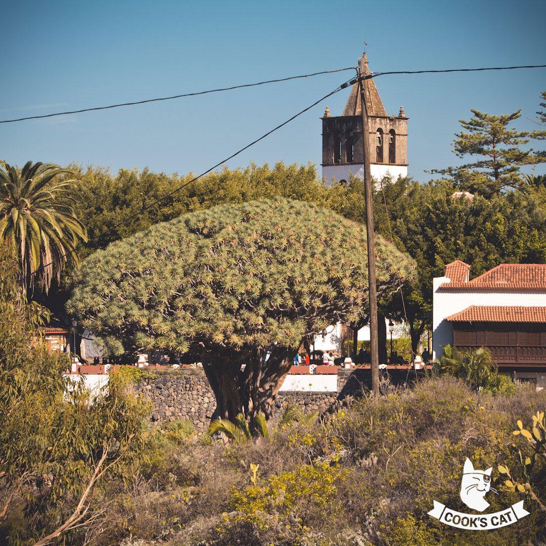 Die kleine Stadt Icod de los Vinos liegt an der Nordküste Teneriffas. Neben dem angeblich 1.000 Jahre alten Drachenbaum lockt der kleine schwarze Lavastrand und der tolle Blicke auf den Teide.