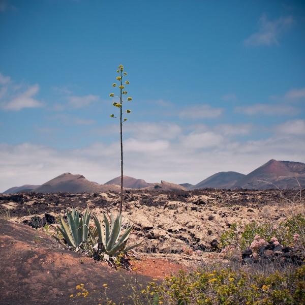 Cooks-Cat_Fuerteventura-Ausfluege_Lanzarote