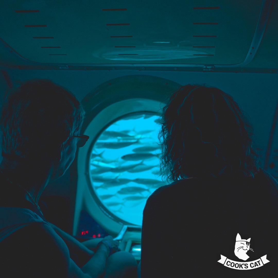 Teneriffa hat eine äußerst Artenreiche Unterwasserwelt und lädt mit angenehmen Wassertemperaturen ganzjährig zum Tauchen, Baden oder Wale beobachten.