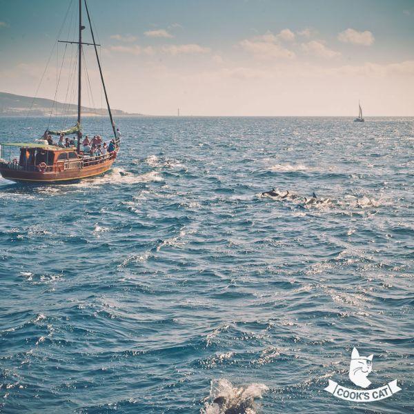 Delfine auf einem Bootsausflug im Süden Fuerteventuras