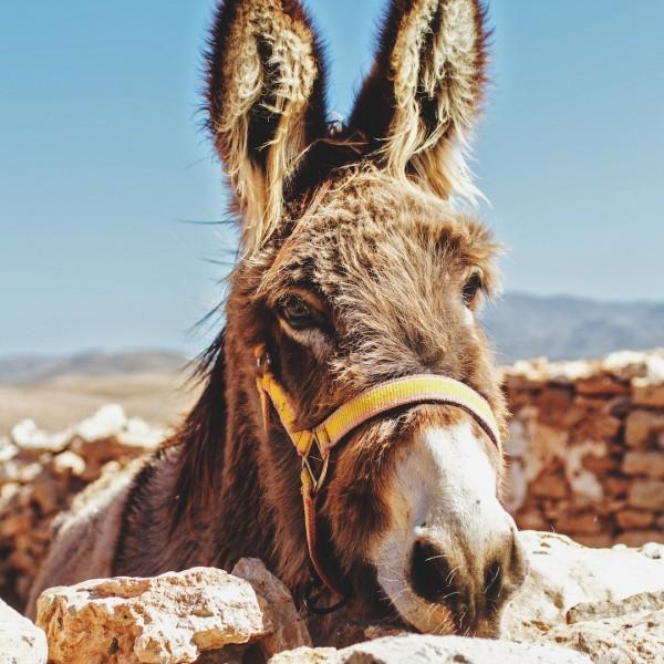 Cook-s-Cat_Fuerteventurauasfluege_eine-Woche-Fuerteventura-Urlaub
