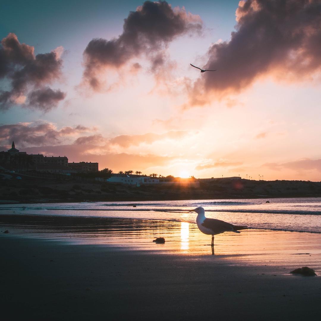 Der Urlaubsort Costa Calma im Südosten Fuerteventuras bietet Spanien Urlaubern schöne Sandstrände und tolle Freizeitmöglichkeiten. Der Ort ist dank der Ortsumgehung und einem umfassenden Baustopp wieder so ruhig, wie der Name Costa Calma verspricht.